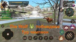 The Wolf 🐺 побеждаем Тур чемпион в игре игра game,смотреть мультфильмы онлайн мультики для детей