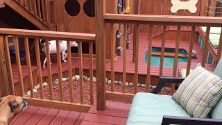Dad Builds Palace For Dogs