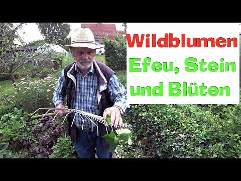 Wildblumen-Insel + Efeu, Stein und Blüten. Garten schön gestalten. Film 83