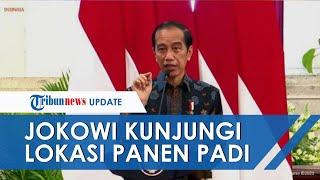 Didampingi Sejumlah Pejabat Negara, Jokowi Kunjungi Lokasi Panen Padi di Indramayu & KIT Batang