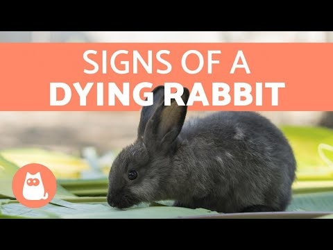 , title : '5 Signs Your Rabbit is Dying
