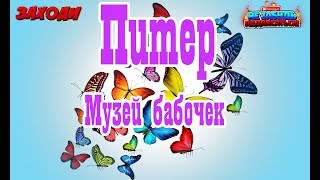 Санкт Петербург - Музей бабочек