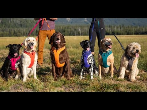 Top 3 Best Dog Harnesses Reviews In 2019