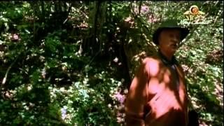 Čarovná země 2004 Celý Film CZ Dabing