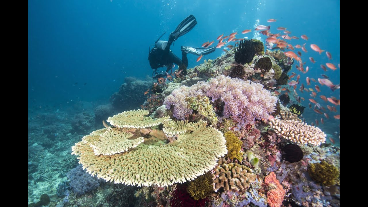 This Earth Day May Be Our Last With The Great Barrier Reef thumbnail