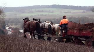 Ackergäule In Der Landwirtschaft