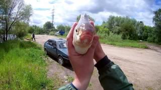 Рыбалка в бронницах на москве реке