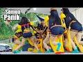 Download Lagu Semua Panik !! DETIK-DETIK MENDEM HEBOH - Ndolalak Adella Putri Mp3 Free