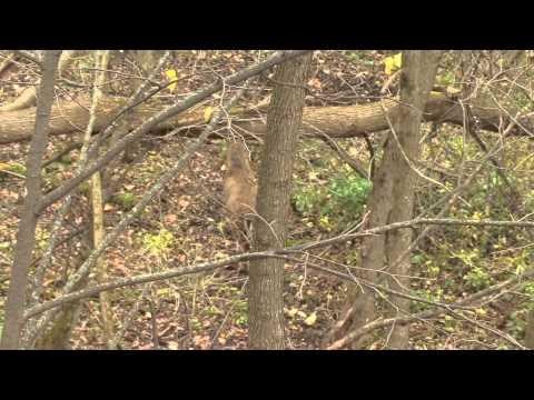 Rutting Ridge Outfitter Part 2 in Buffalo County, WI