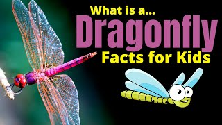 Dragonfly Facts For Kids | Learn About One Of The Most Fascinating Insects