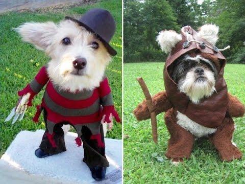 E tu, come lo vesti il tuo cane ad Halloween?