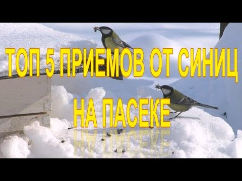 ТОП 5 ПРИЕМОВ ОТ СИНИЦ НА ПАСЕКЕ (PROTECTION OF BIRDS IN THE APIARY)