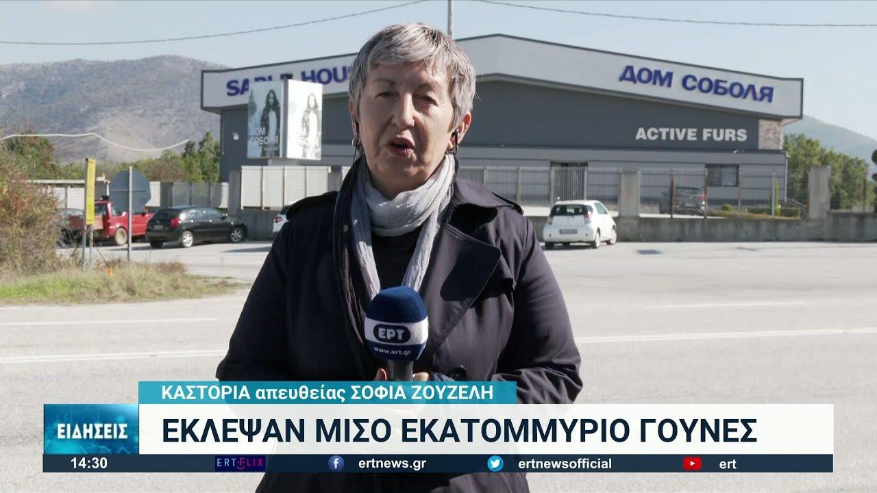 Έκλεψαν γούνες αξίας 500.000 ευρώ από την Καστοριά | 20/10/21 | ΕΡΤ