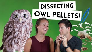 LIVING THE WAY Vlog // Dissecting Owl Pellets!