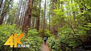 4K Walking Tour through Olympic National Park - 4K 10Bit Color