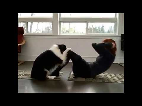 Amazing Videos | Dog Yoga | Yoga Teacher Dog  Helping The Girl In Exercises