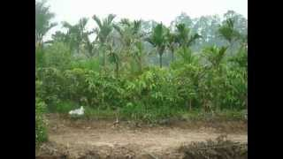 preview picture of video '2012_04_14_1452_Canh dong Xuan Quan 70ha'