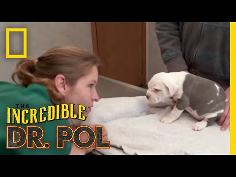 Eye-Ya-Ya | The Incredible Dr. Pol