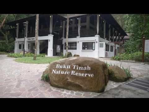 Explore the revamped Bukit Timah Nature Reserve