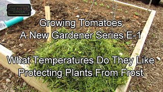 Growing Tomatoes - A New Gardener Series E-1: Growing Temperatures, Frosts Protection, Tomato Types