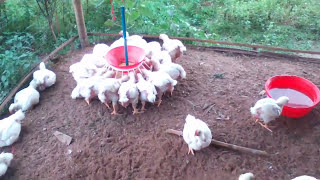Poultry Farming In Bengali