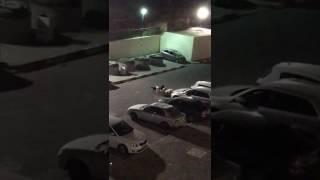 צפו: להקת כלבי טרף משסעים חתולה בבית שמש