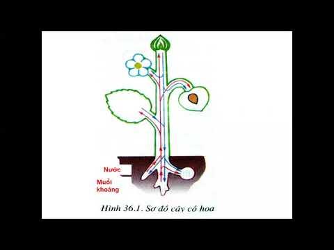 Sinh học 6: Tổng kết về cây có hoa