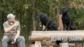 Train Your Labrador For Duck Hunting Situations
