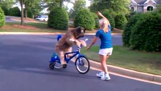 Dog Rides Bike Super cool!