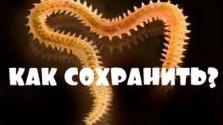 Морские черви для рыбалки как сохранить