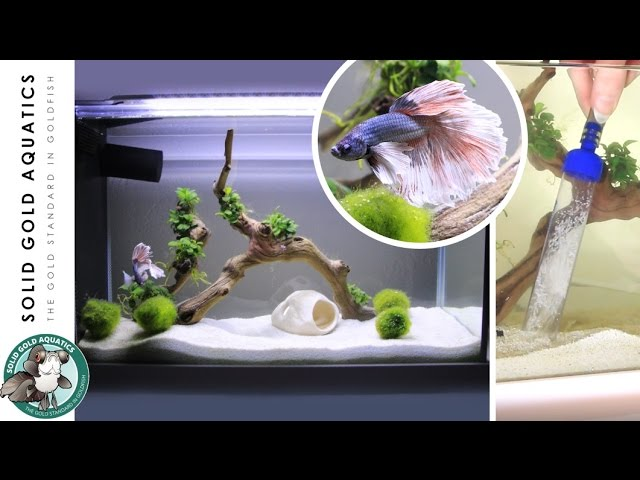 How I Do Water Changes for My Betta Fish