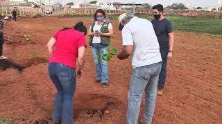 No Dia da Arvore, os apelos pela preservação com o plantio de mudas