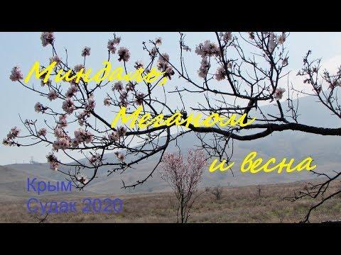 Крым 2020, Судак, Море и весна. Цветение миндаля на Меганоме 11 марта