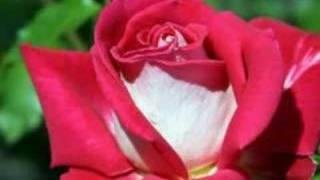 Roze Video
