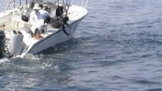 PSFL Overwhelmed by Tuna