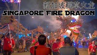 Singapore Fire Dragon 新加坡稻草火龙