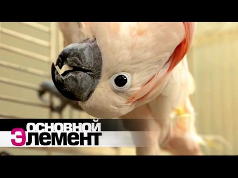 Меч и магия 8 скачать русская версия