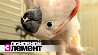 Как понять язык животных