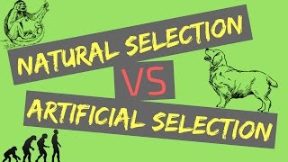 Natural Selection Vs Artificial Selection | Mechanisms Of Evolution