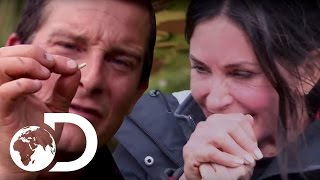 Bear Grylls and Courtney Cox cooking maggots to perfection