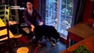 Perros Extraordinarios - Mucho más que Lealtad