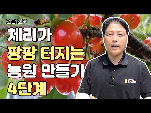 수입산보다 맛있는 국내 체리 재배, 4가지 포인트 공개