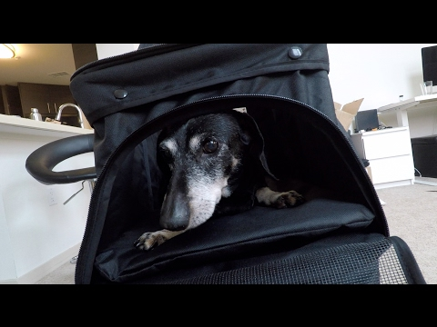 Cute Dachshund Oxgord Pet Stroller Review