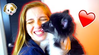 SURPRISING MY GIRLFRIEND WITH A PUPPY! *SHE CRIED*