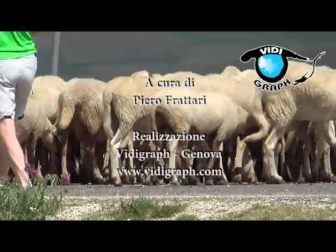 Antibiotici edema prostata
