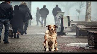 Бездомные животные!   Социальный ролик. Бродячие собаки 2018 Питомник Социальная реклама