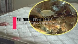 Anti Mites HomeMade Spray! Eliminate Mites Effectively And 100% Naturally