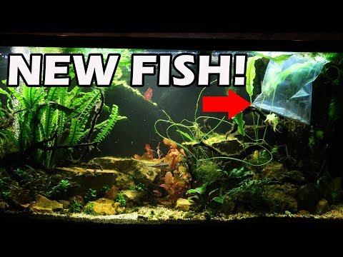 NEW FISH in the 220 GALLON!
