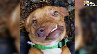 Dog Has Most Adorable Smile | The Dodo
