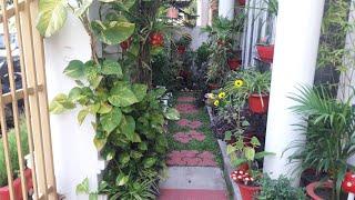 Tour My Little Front Garden & Porch Garden With Indoor Plants